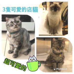 北茶屋可愛貓